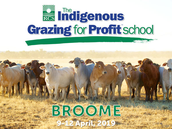 The Indigenous Grazing for Profit School Broom. 9-12 April, 2019. Cattle standing in paddock.
