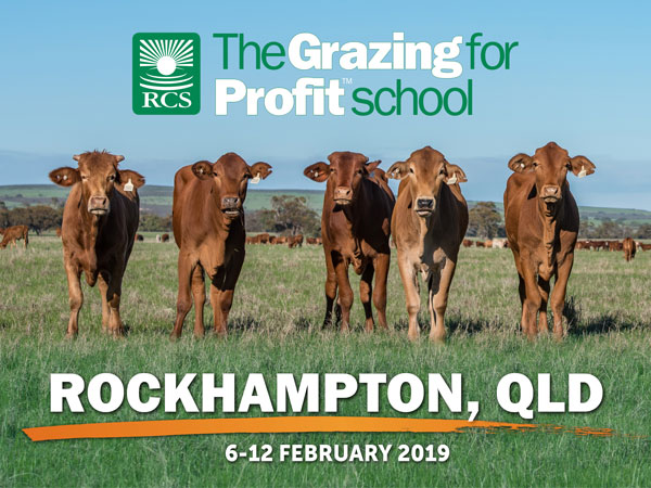 Rockhampton grazing for profit school. Steers standing in a paddock.
