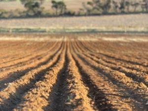 The Bullies of Biological Farming