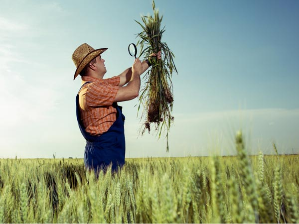 Man in field looking at crop with magnifying glass