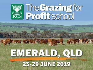 Emerald Grazing for Profit School. Cattle grazing in a paddock