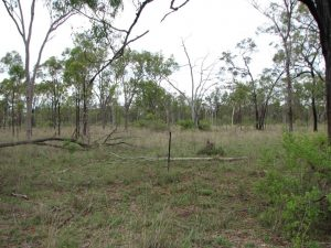 """""""Rain ready"""" captured 1st storm, Box/Ironbark Charters Towers, Black spear, Bluegrass, Indian couch, Stylo, ground cover and tussocks"""