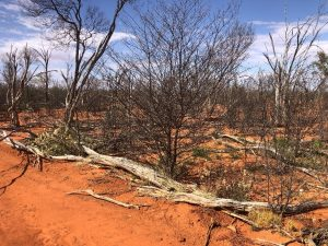 A ROAD DRAINING MULGA COUNTRY. SAME DAY, TWO SIDES, 5 METRES APART