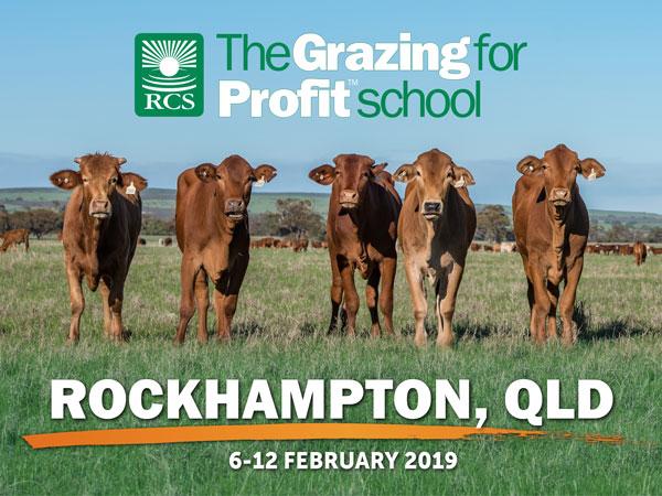 Rockhampton grazing for profit school. Steers standing in a paddock.