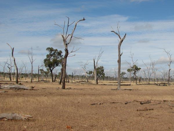Overgrazed landscape.