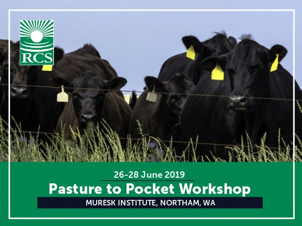 Pasture to Pocket Workshop. Angus cattle standing behind a fence.